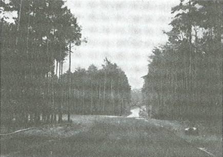 Hockenheim Kurpfalzring 1938